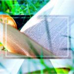 Верстка книг